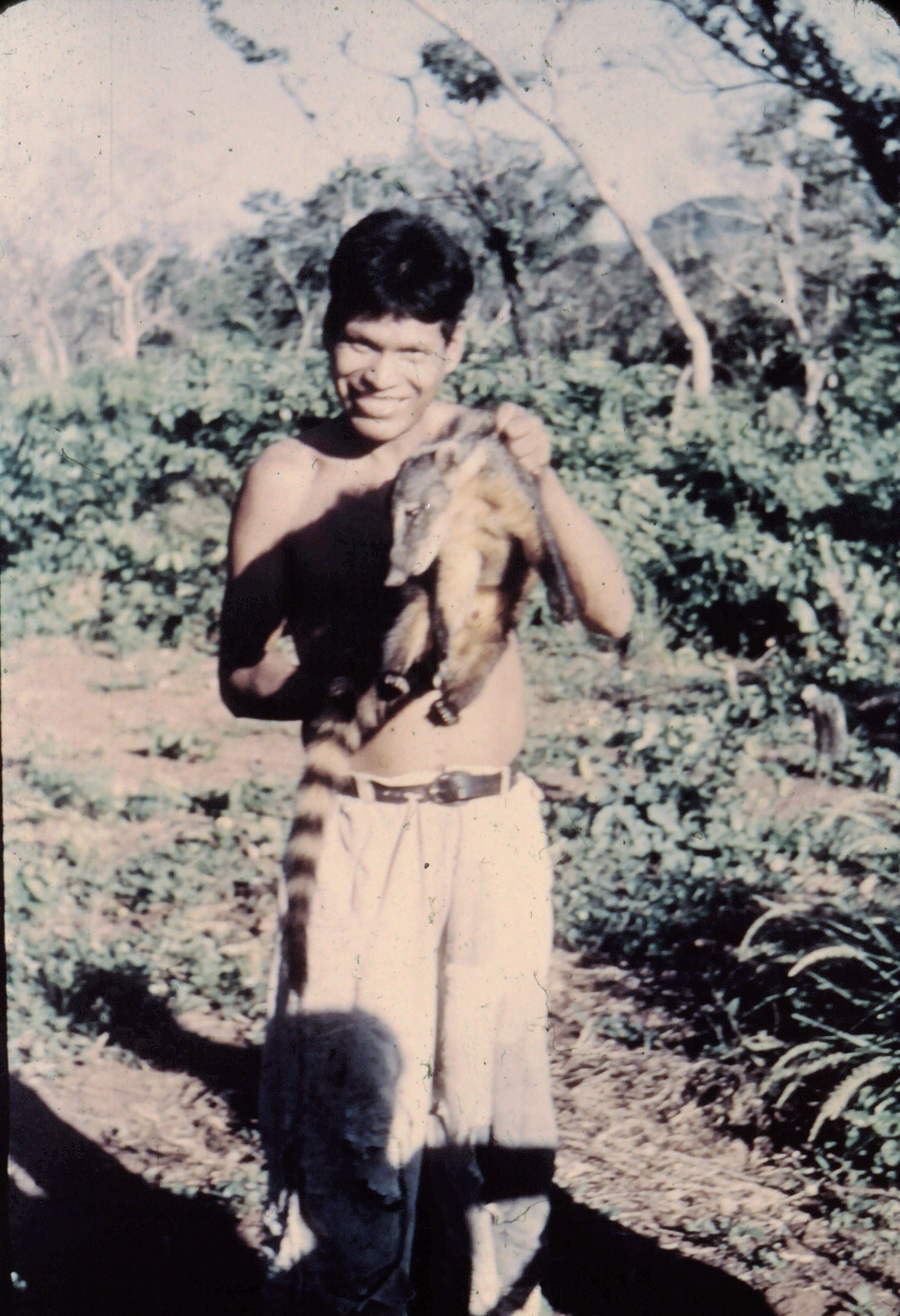 Ayoré man captures a small badger-like animal.