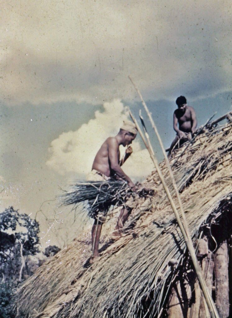 Ayoré men quickly learned the art of roofing a house with palm leaves.