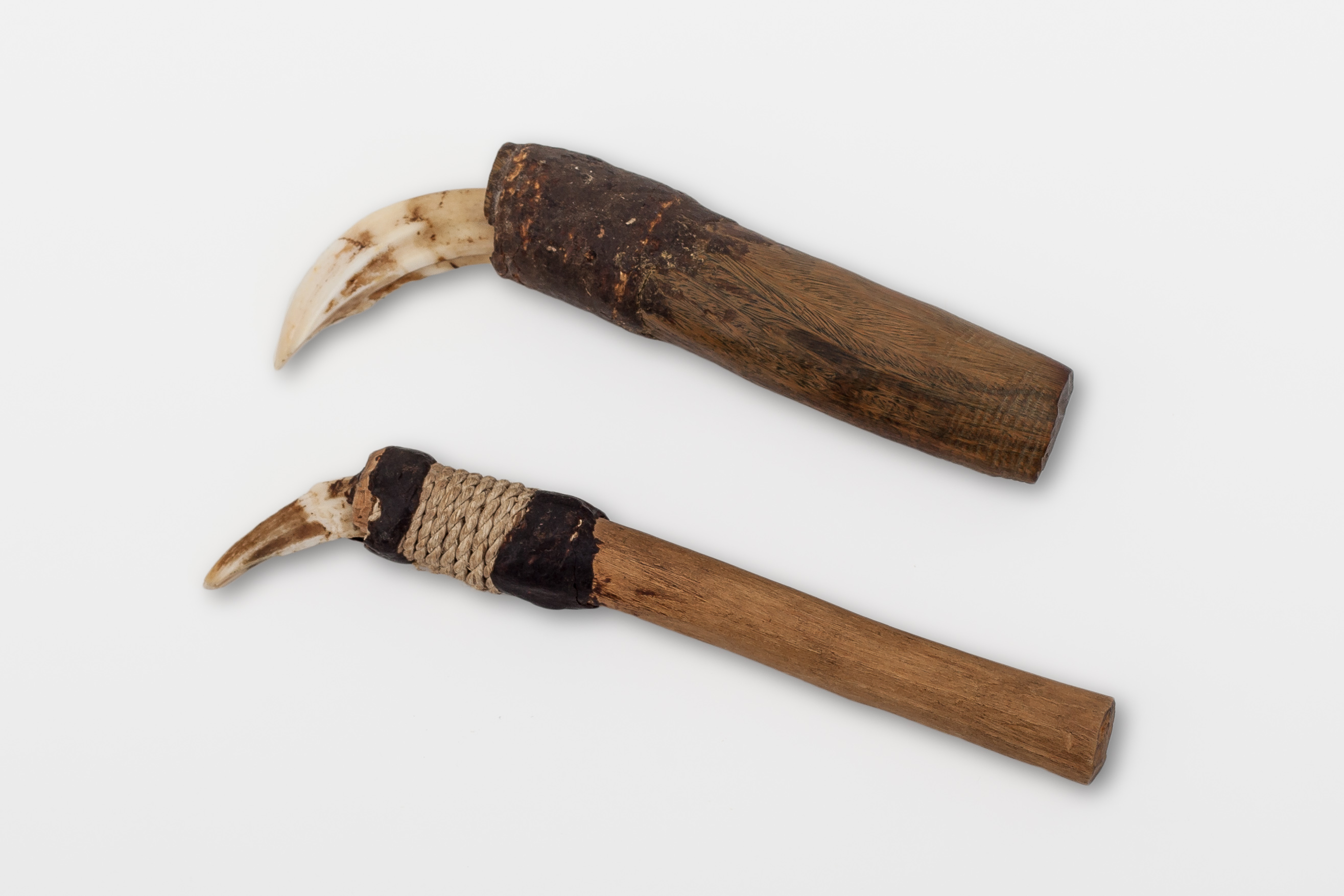 Plane for scraping wood, made from the tooth of a wild pig.