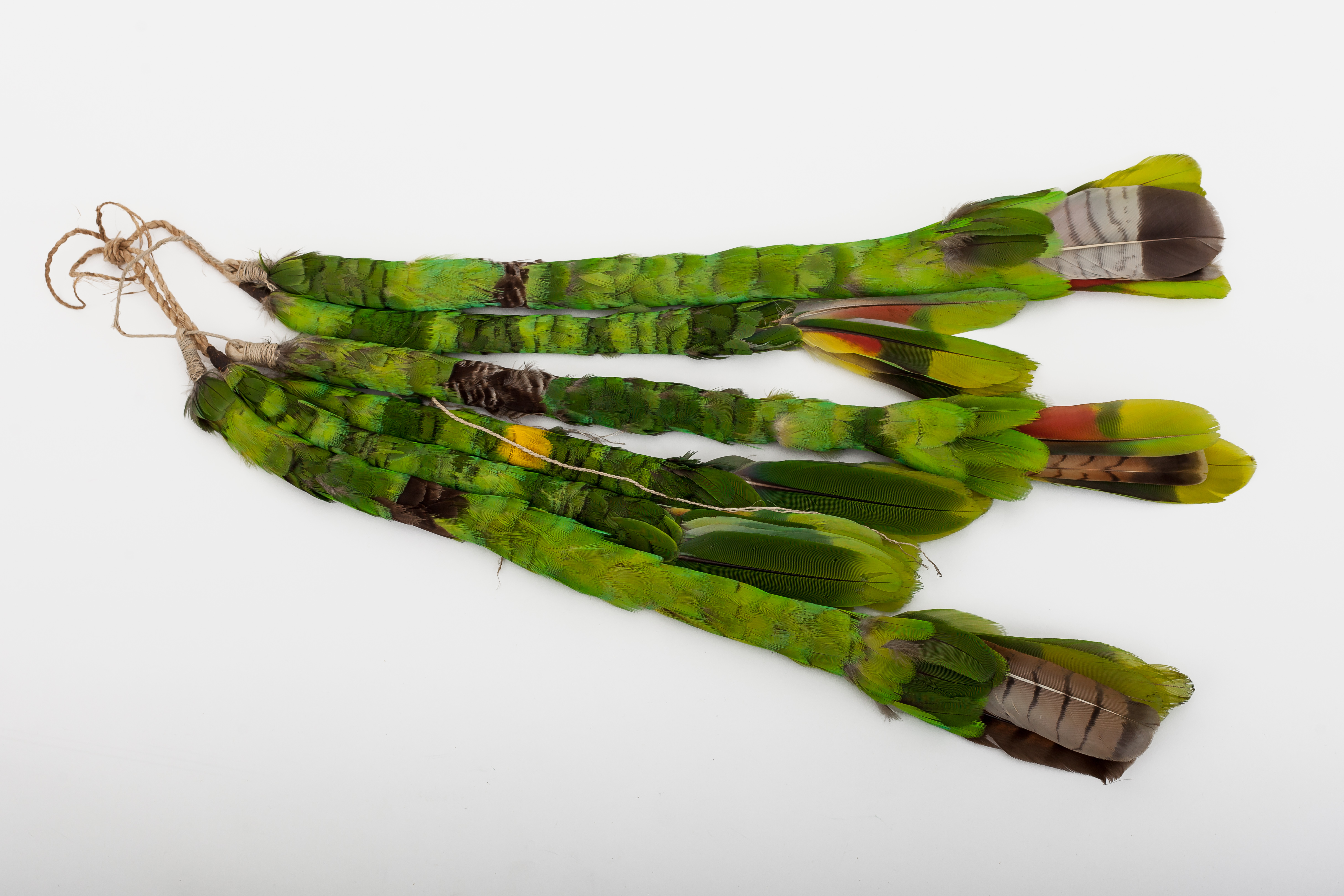 Parrot feathers, woven to look like a tail worn by men.